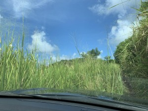 Road to the station - high grass